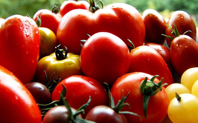 Tomatensamen von Alten Sorten