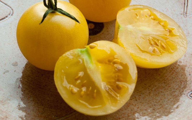 Viele lustige Tomatensamen kaufen
